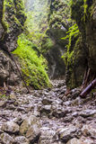 Ravine Cracow - Tatra National Park, Poland. Royalty Free Stock Images