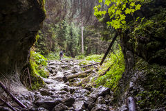 Ravine Cracow - Tatra National Park, Poland. Stock Photos