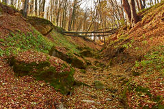Ravine in the forest Royalty Free Stock Images