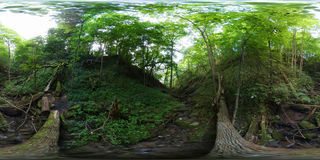 Overgrowth ravine in the forest Royalty Free Stock Image
