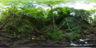 Overgrowth ravine in the forest Stock Photography