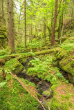 Ravine in a forest with creek Royalty Free Stock Photography