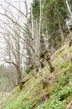 Ravine landscape Royalty Free Stock Photo