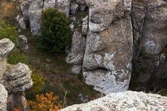 Ravine mountain. Tree is Demerdji in the Crimea Stock Image