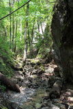 Ravine in National park Slovak Paradise, Slovakia. Ravine in National park Slovak Paradise in Slovakia stock images