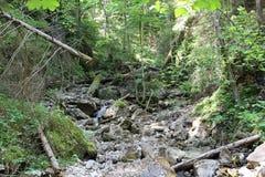 Ravine in National park Slovak Paradise, Slovakia. Ravine in National park Slovak Paradise in Slovakia stock photo