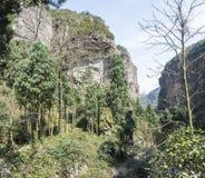 Ravine. This photo was taken in the Jingming  scenery area, Yandang Mountain,Zhejiang province,china Royalty Free Stock Image