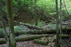 Ravine in Slovak Paradise National park, Slovakia. Ravine in Slovak Paradise National park in Slovakia stock images