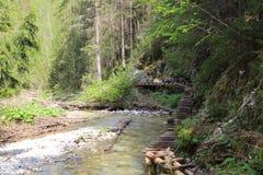 Ravine in Slovak Paradise National park, Slovakia. Ravine in Slovak Paradise National park in Slovakia royalty free stock photography