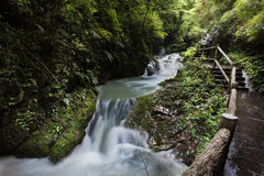 Ravine stream in the Black Mountain Valley Stock Images