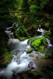 Ravine stream. Mountain stream at Shennongjia of China royalty free stock photo