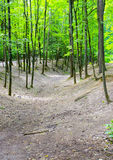 The ravine and trees. In a large ravine trees Royalty Free Stock Image