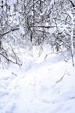 Ravine in winter fairy forest Royalty Free Stock Image