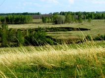 Ravines of forest-steppes. Deep ravines last on forest-steppes of Altai Stock Images