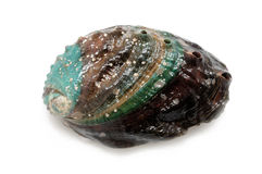 Raw abalone Royalty Free Stock Photo