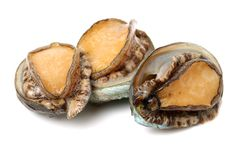 Raw abalone. Isolated on white background Stock Photo
