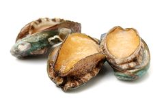 Raw abalone royalty free stock images