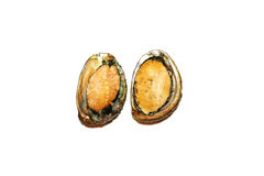 Raw Abalones in shells Royalty Free Stock Photography