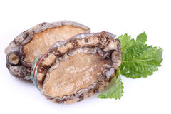 Raw abalones. On the white background Royalty Free Stock Image
