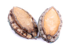 Raw abalones. On the white background Stock Images