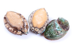 Raw abalones. On the white background Royalty Free Stock Photography