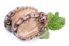 Raw abalones Royalty Free Stock Images