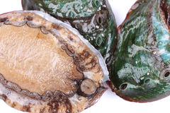 Raw abalones. On the white background Royalty Free Stock Images