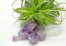 Raw Amethyst Royalty Free Stock Photography