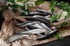 Raw Anchovies. On brown paper with fresh parsley Royalty Free Stock Image