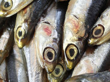Raw anchovies just fish for sale in fish market Stock Photography