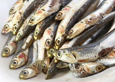 Raw anchovies just fish for sale in fish market Royalty Free Stock Photos