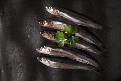 Raw anchovies. Presenting series anchovy crude above background black stone Stock Photography