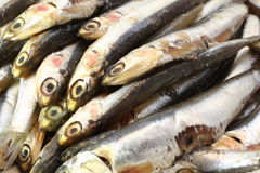 Raw anchovies ready to Cook Royalty Free Stock Image