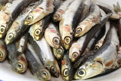 Raw anchovies ready to Cook Royalty Free Stock Images