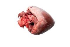 Raw animal heart Stock Photo