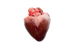 Raw animal heart Royalty Free Stock Image