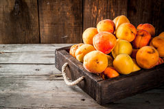 Raw apricots in wooden box. Summer fruits. Fresh raw organic farm apricots in a wooden box, a tray, on an old wooden rustic table. Copy space Royalty Free Stock Image