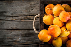 Raw apricots in wooden box. Summer fruits. Fresh raw organic farm apricots in a wooden box, a tray, on an old wooden rustic table. Copy space top view Royalty Free Stock Photography