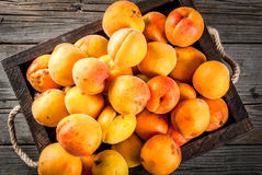 Raw apricots in wooden box. Summer fruits. Fresh raw organic farm apricots in a wooden box, a tray, on an old wooden rustic table. Copy space top view Royalty Free Stock Image