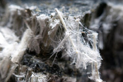 Raw asbestos fibers. Asbestos chrysotile fibers that cause lung disease, COPD , cancer and mesothelioma Royalty Free Stock Photo