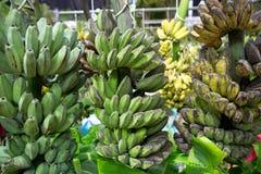 Raw banana bunch. Many green bananas. Young green banana on tree. Unripe bananas close up Royalty Free Stock Image