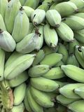 Raw banana. Green banana background Royalty Free Stock Photography