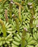 Raw banana Royalty Free Stock Photography