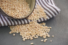 Raw barley on wooden background. Raw barley on a cup spills to grey wooden background Stock Photos
