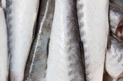Raw Barracuda Fish Texture Stock Image