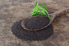 Raw basil seed, herb in Thai. Aids digestion as a laxative Royalty Free Stock Photo