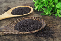Raw basil seed, herb in Thai. Aids digestion as a laxative Stock Images
