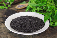 Raw basil seed, herb in Thai. Aids digestion as a laxative Royalty Free Stock Images