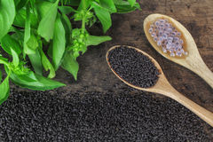 Raw basil seed, herb in Thai. Aids digestion as a laxative Royalty Free Stock Photography