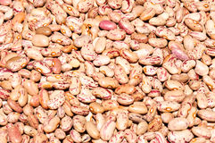 Raw beans Royalty Free Stock Images